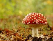 о чём думают грибы